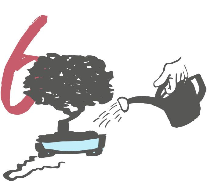 Les 6 erreurs les plus communes dans l'entretien du bonsaï