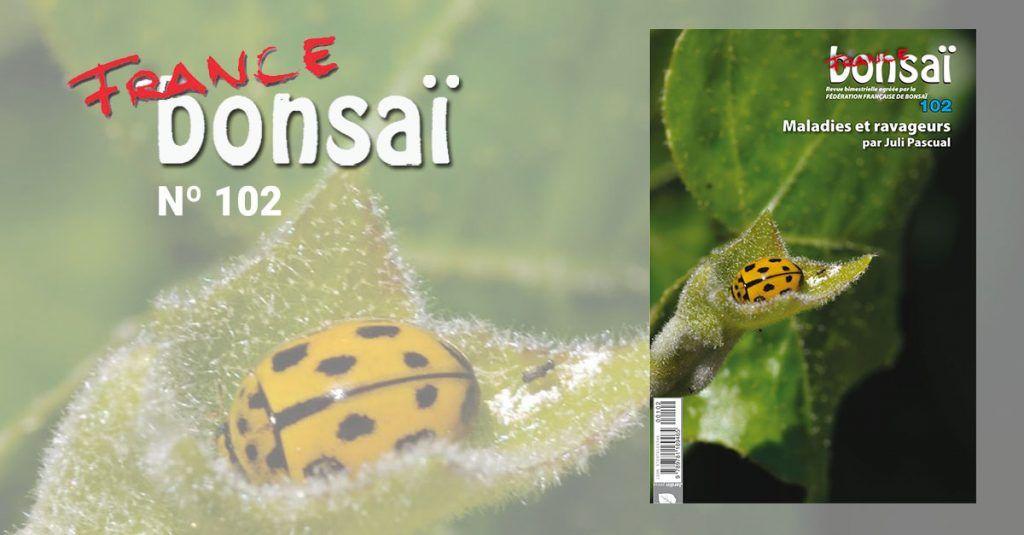 Monographie France Bonsai: Maladies