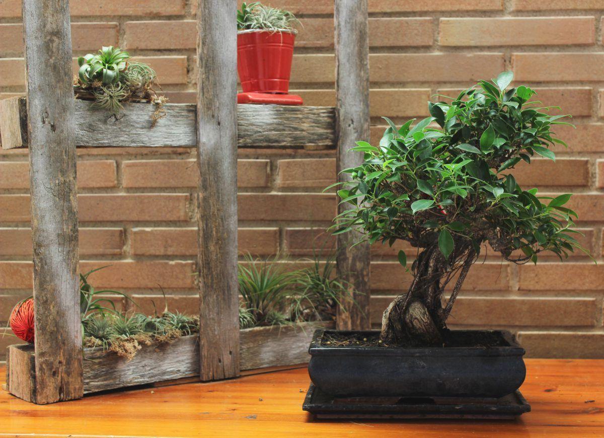 Leçons de base pour votre bonsaï
