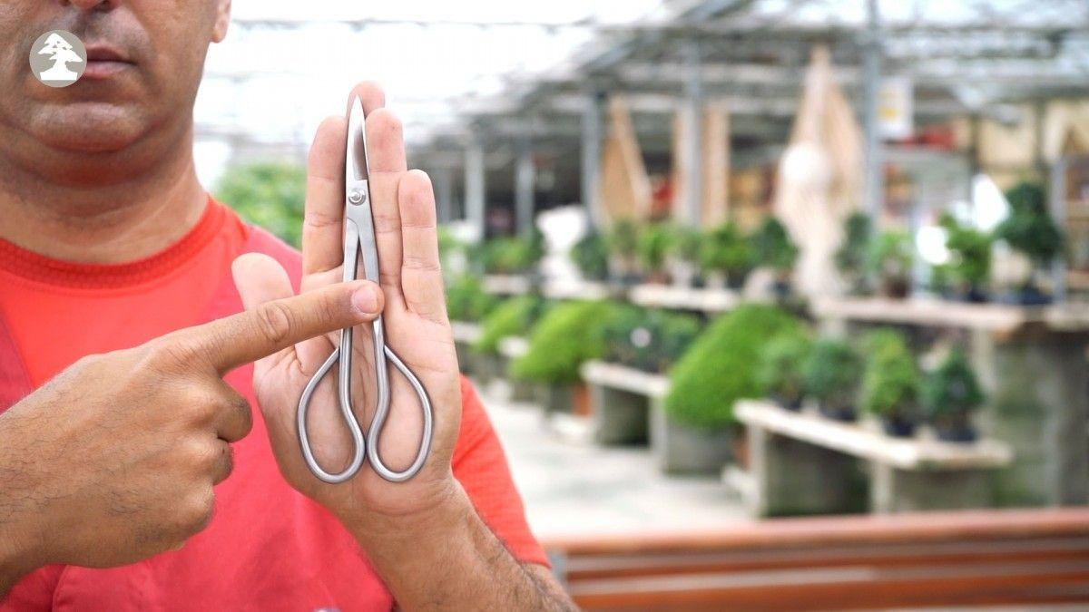 Cómo saber si tengo las tijeras para bonsái adecuadas a mis manos