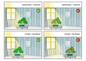 bonsai interior